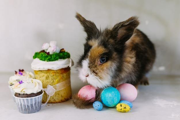 灰色の背景に色とりどりの塗られた卵を持つイースターバニーウサギ。イースター休暇のコンセプト