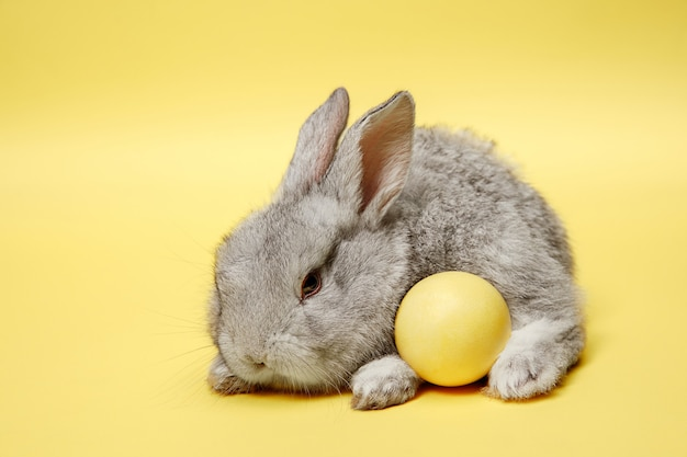 Easter bunny rabbit with painted egg on yellow background. easter holiday concept.