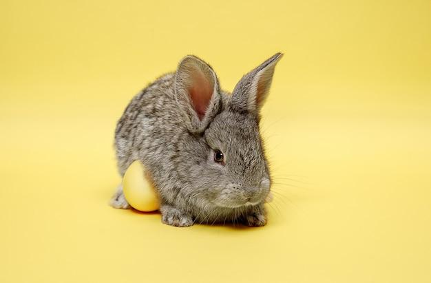 Coniglio di coniglietto di pasqua con uovo dipinto sulla parete gialla