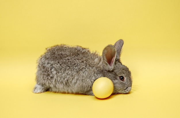 Easter bunny rabbit with painted egg on yellow