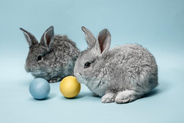 Coniglio di coniglietto di pasqua con uova dipinte su sfondo blu. pasqua, animale, primavera, celebrazione e concetto di vacanza.