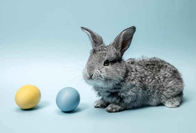 Easter bunny rabbit with painted eggs on blue background. easter holiday concept.