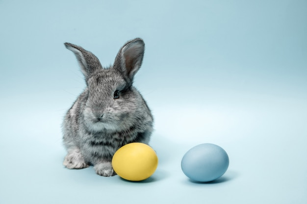 Easter bunny rabbit with painted eggs on blue wall