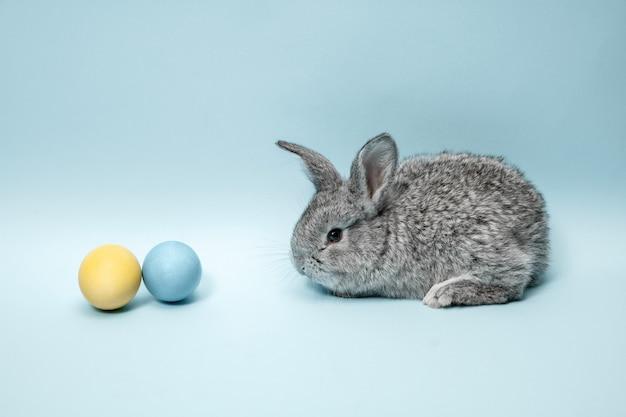 Пасхальный заяц кролик с крашеными яйцами на синем