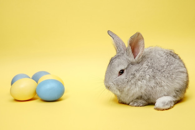 Easter bunny rabbit with painted eggs on yellow background. easter holiday concept.