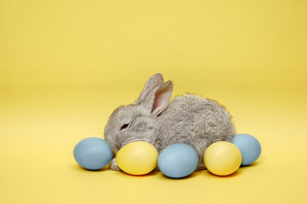 Easter bunny rabbit with painted eggs on yellow wall
