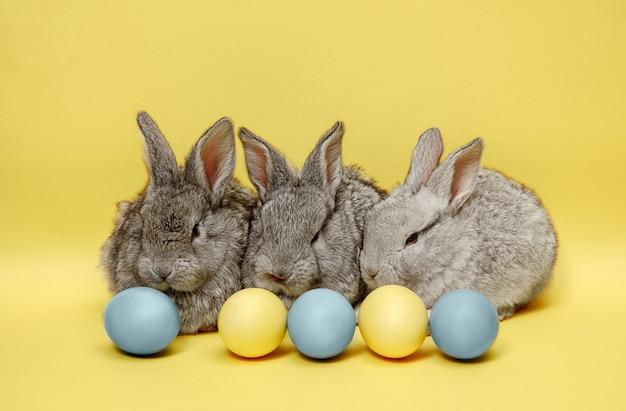 Пасхальные кролики с крашеными яйцами на желтой стене