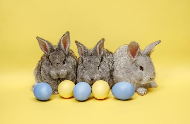 Пасхальные кролики с крашеными яйцами на желтом