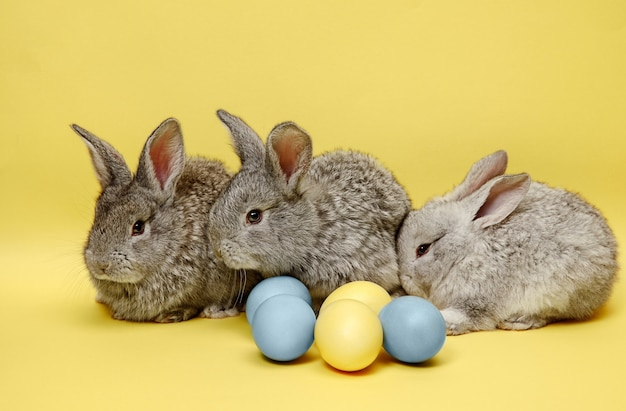 黄色に塗られた卵とイースターバニーウサギ