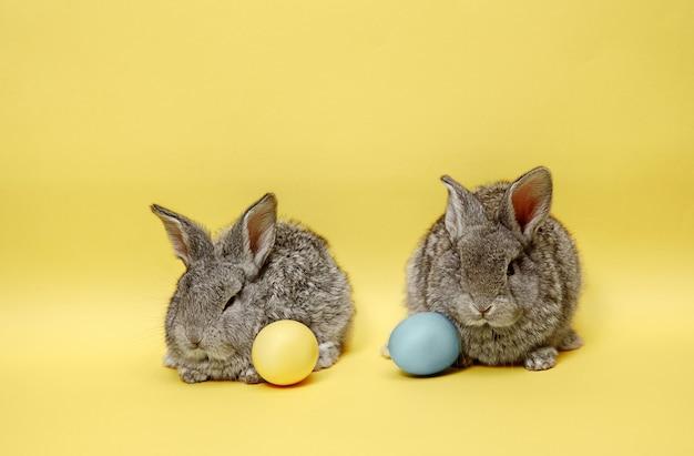 Conigli di coniglietto di pasqua con le uova dipinte sulla parete gialla