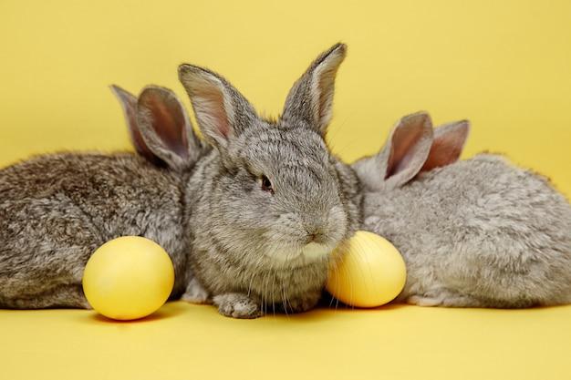Conigli di coniglietto di pasqua con uova dipinte su giallo