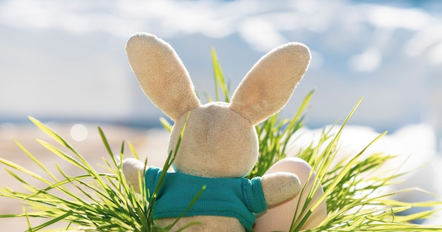 부활절 토끼는 부활절 달걀과 함께 잔디에 앉아있다. 파란색 배경입니다. 달걀 사냥