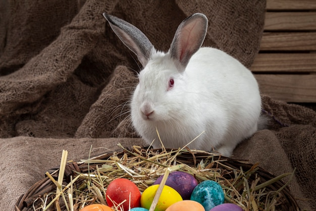 Easter bunny sitting near a wicker basket with multi-colored eggs on a burlap background
