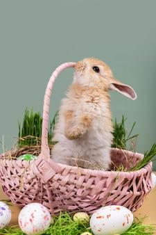 부활절 카드-그린 부활절 달걀과 분홍색 바구니에 작은 장식 생강 토끼