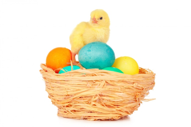 Easter colorful eggs and cute little chicken isolated