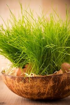 녹색 잔디 달걀 껍질의 부활절 구성입니다.