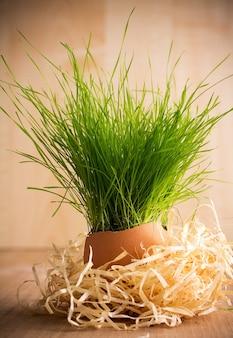 緑の草の卵殻のイースター構成。