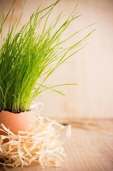 Пасхальный состав яичной скорлупы зеленой травы.