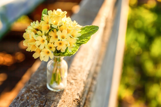 Easter concept. bouquet of primrose primula with yellow flowers in glass vase under soft sunlight and blurred backdrop. inspirational natural floral spring or summer blooming. copy space.