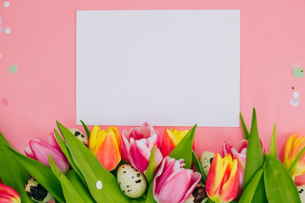 Easter concept, white blank and confetti, multicolored tulips, quail eggs on pink background