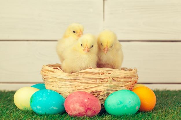 부활절 달걀과 푸른 잔디에 닭