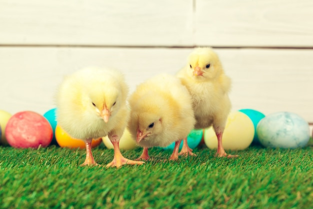 Easter eggs and chickens on green grass