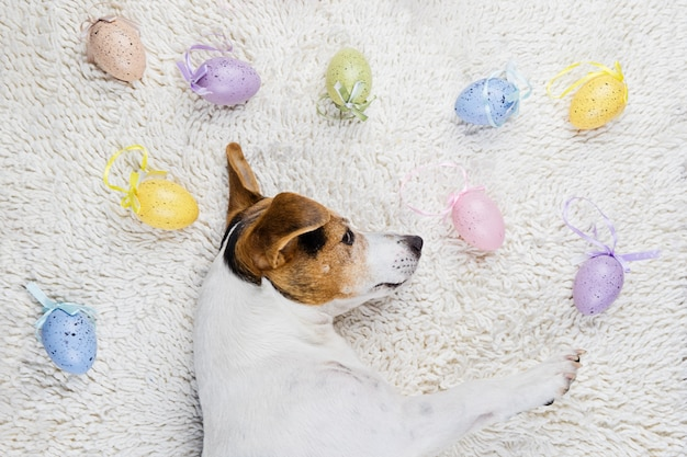 Easter eggs with funny puppy in white rug