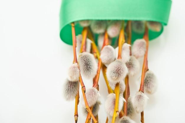 부활절. 음부 버드 나무 가지 녹색 리본 흰색 배경에 고립 얽혀.