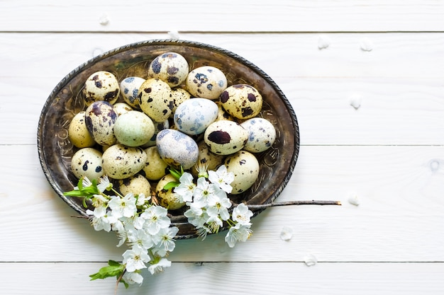 Easter quail eggs, apricot flower, plate on white wooden background flat lay