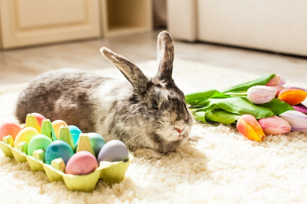 Easter rabbit in the room on a carpet with colorful eggs
