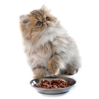 Eating persian kitten
