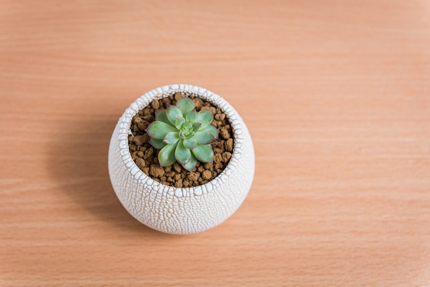Echeveria orion mini succulent plants in pots  on wooden table, top view