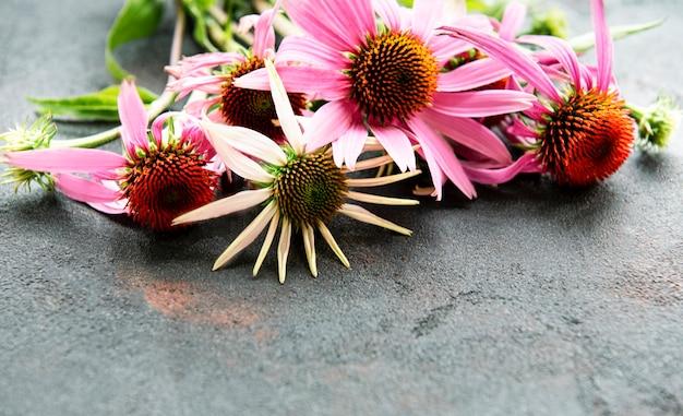 黒いコンクリートの表面にエキナセアの花