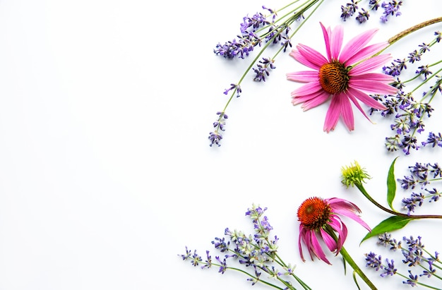 Echinacea and lavender flowers flat lay.