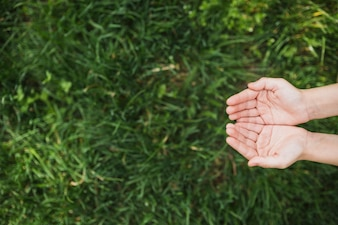 Eco concept with hands above grass