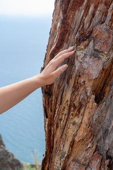 Молодая женщина концепции eco касается поврежденной коры старого дерева ее рукой. вертикальное изображение.