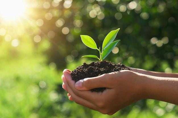エコアースデーのコンセプトです。太陽と緑の自然の中で若い植物を持っている手