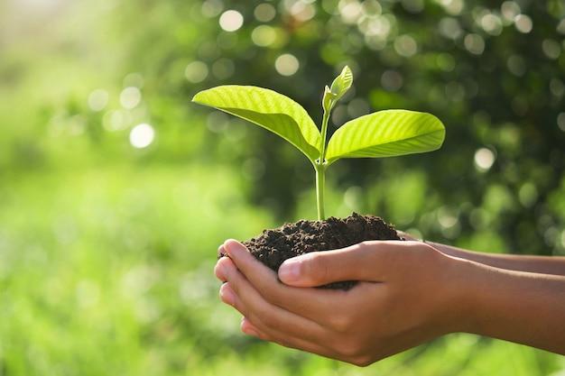 エコアースデーのコンセプトです。太陽と緑の自然の中で若い植物を持っている手 Premium写真