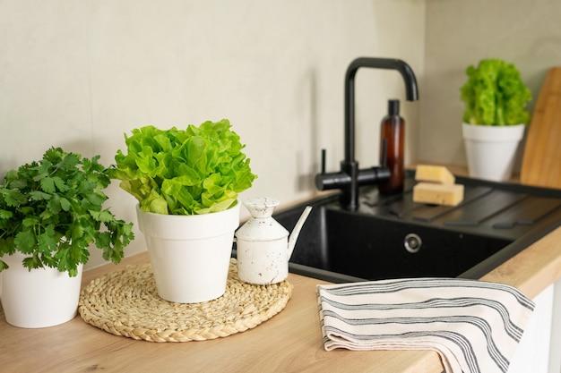 モダンなキッチンにある環境にやさしいクリーニング製品と食器用洗剤。手前の家の庭から鉢植えのレタス。