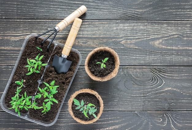 나무 배경에 녹색 어린 묘목 토마토가 있는 친환경 냄비, 정원 흙손, 갈퀴