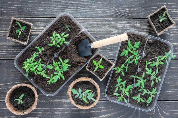 나무 배경에 어린 토마토 새싹과 정원 흙손이 있는 친환경 냄비