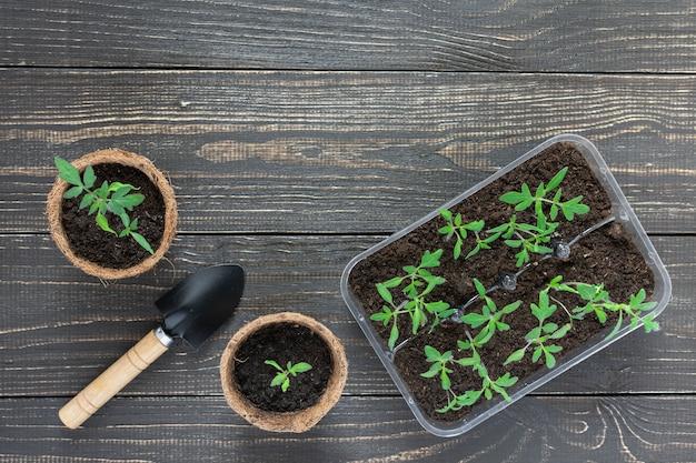 若いトマトの芽と木製の背景に庭のこてと環境にやさしいポット
