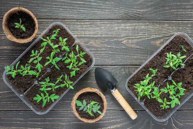 젊은 토마토 콩나물과 나무 배경에 정원 흙손으로 친환경 냄비