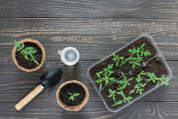 나무 배경에 어린 토마토 콩나물, 정원 흙손 및 물을 물 한 잔과 함께 친환경 냄비
