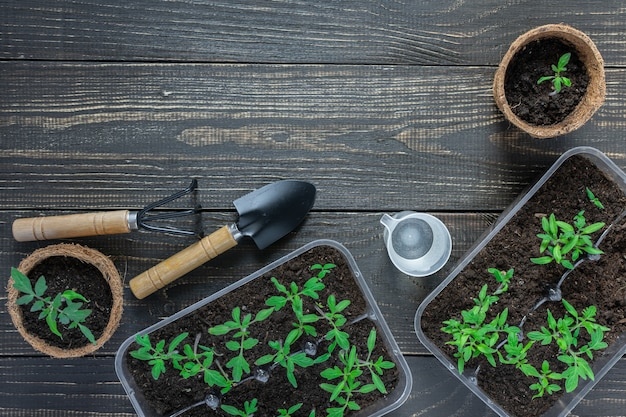 나무 배경에 어린 토마토 새싹이 든 친환경 냄비, 정원 흙손, 갈퀴, 물을 주기 위한 물 한 잔