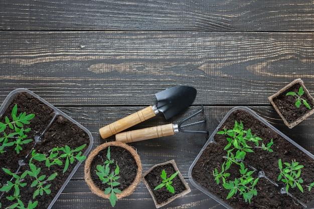 나무 배경, 정원 흙손 및 갈퀴에 어린 토마토 콩나물이있는 친환경 냄비