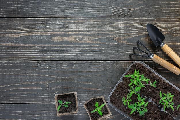 나무 벽, 정원 흙손 및 갈퀴에 어린 토마토 콩나물이있는 친환경 냄비