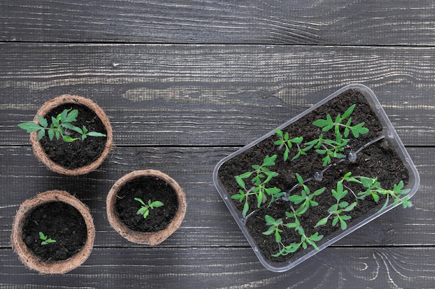 나무 벽에 젊은 토마토 콩나물과 친환경 냄비