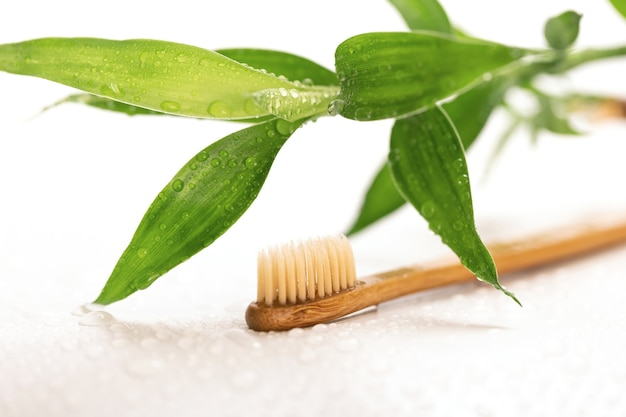 Eco-friendly toothbrush and bamboo plant