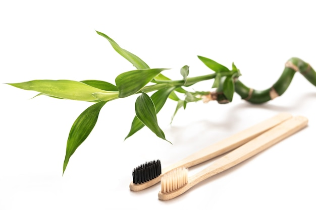 Eco-friendly toothbrushes and bamboo plant